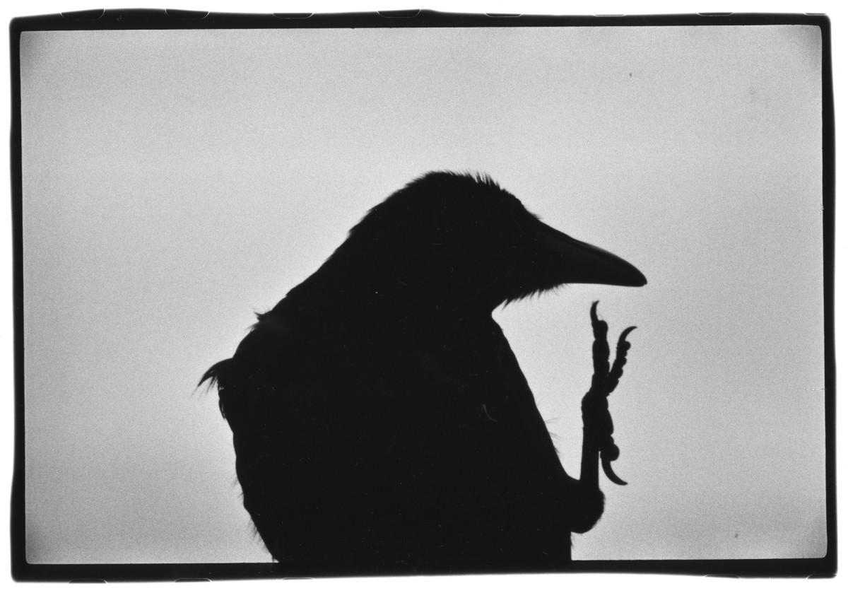 Masahisa Fukase, La solitude du corbeau, 1976 © Masahisa Fukase Archive