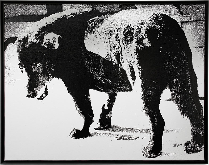 The dog Daido Moriyama