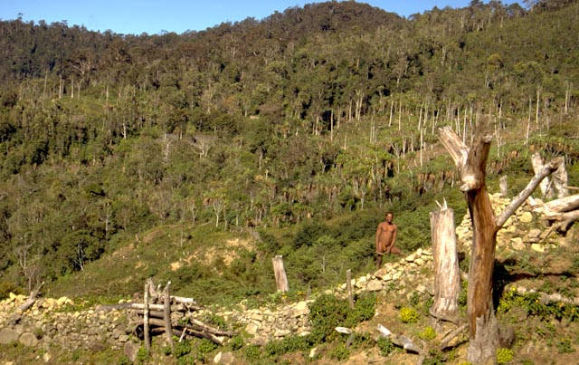 Hautes terres papoues © ppc